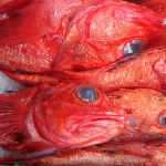 red-snapper-thumb